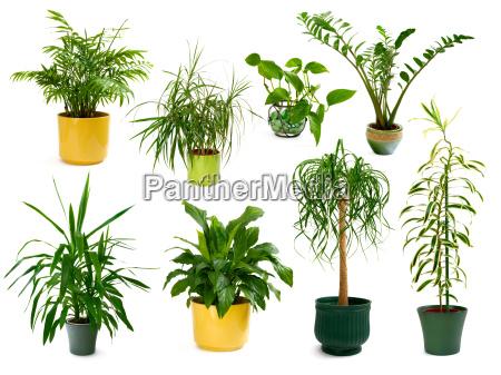 set mit acht freigestellten zimmerpflanzen