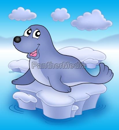 cute seal on iceberg