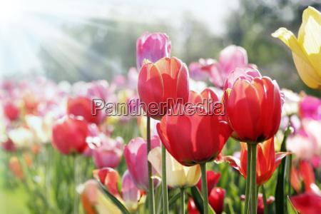 fruehlingssonne
