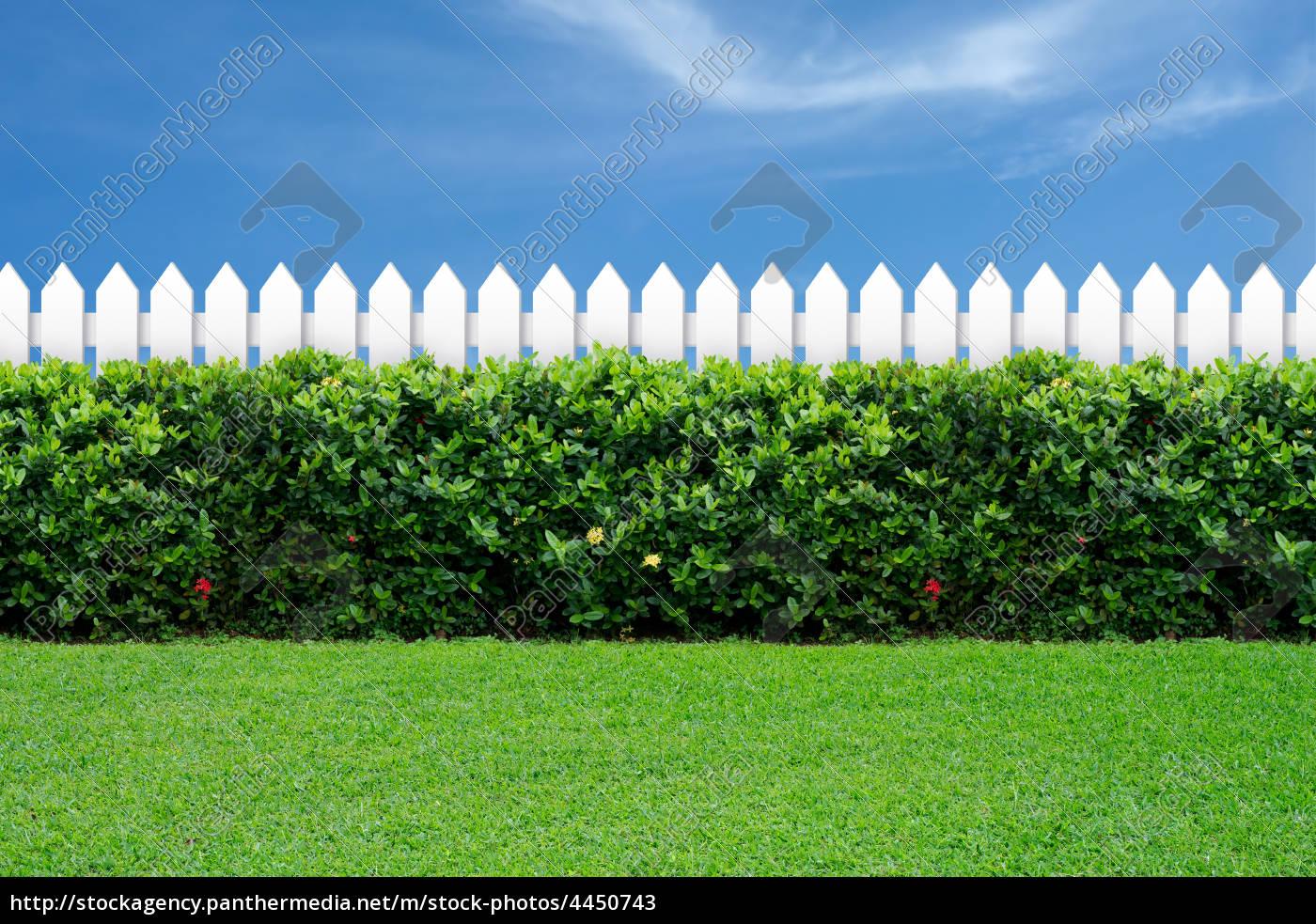 weißer zaun und grünes gras - stockfoto - #4450743 - bildagentur