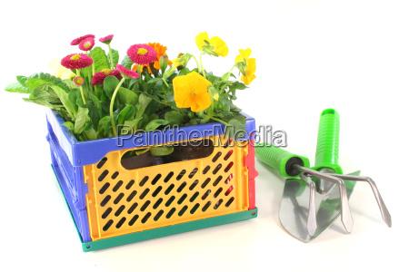 balkonpflanzen in einer klappbox