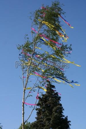 maibaum im wind