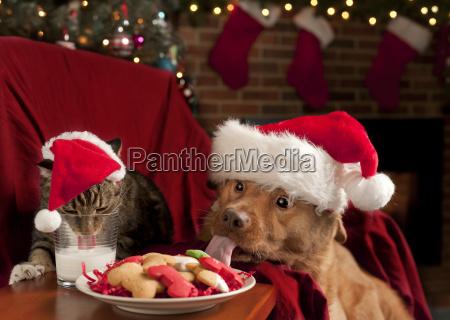 katze und hund essen nikolaus