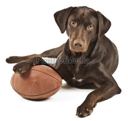 dog with football