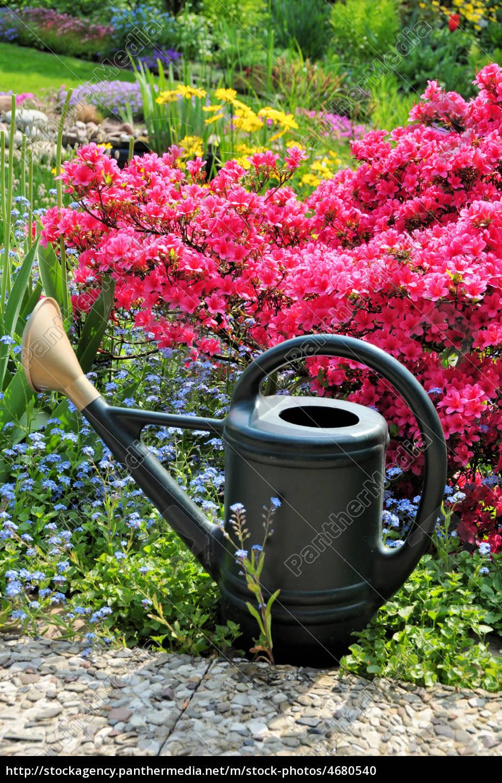 Gießkanne Im Garten Mit Azalee Lizenzfreies Foto 4680540