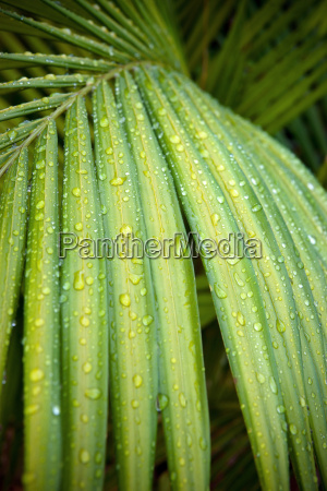 beautiful green palm leaf in the
