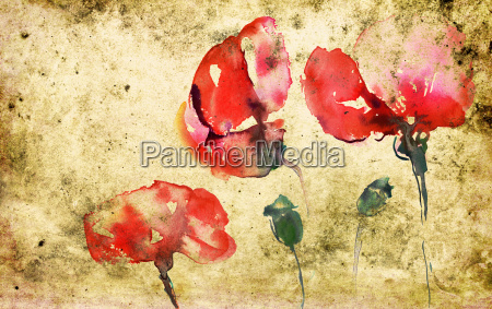 capsules with poppies