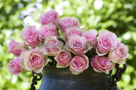 hermosas rosas en un jarron antiguo