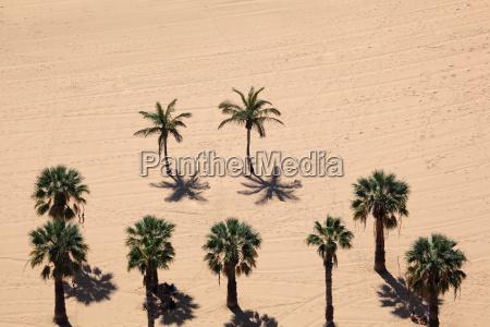 palms on the beach tenerife