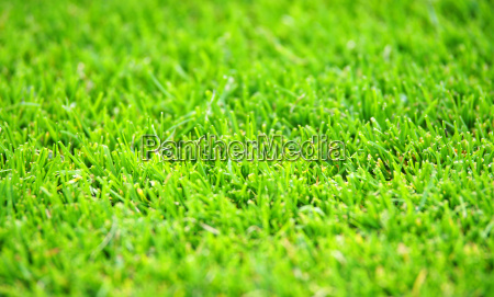 gruener fussball rasen green soccer