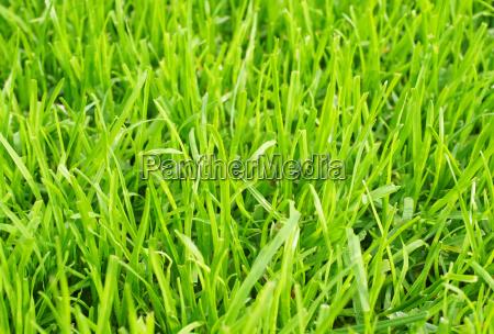 fussball rasen nahaufnahme soccer grass