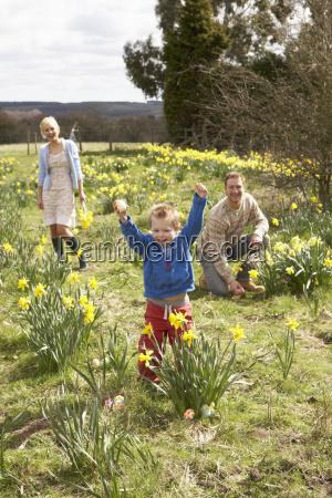 familie auf ostereierjagd im daffodil feld
