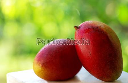 zwei tropische mangofruechte