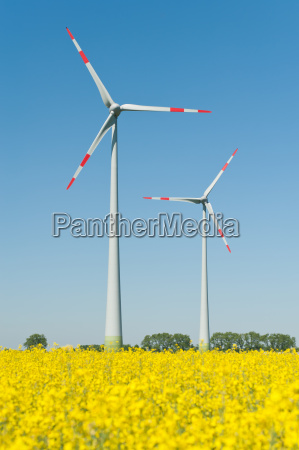 windkraftraeder in einem rapsfeld