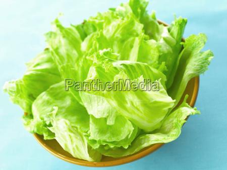 blaetter gemuese diaet eisberg vegetarisch kopfsalat