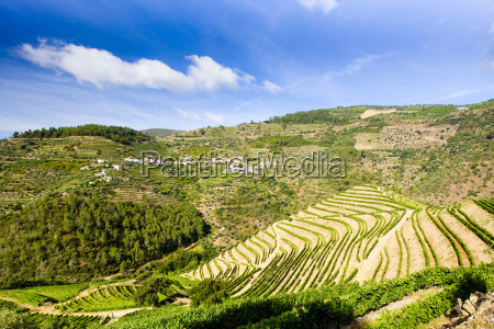 vineyars in douro tal portugal