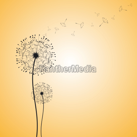 abstract dandelion in the wind wallpaper