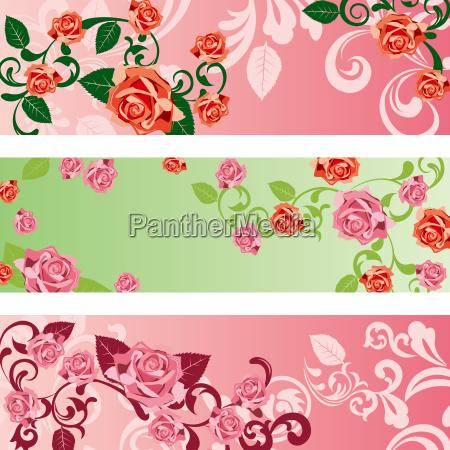 blume pflanze rose veranstaltung romanze liebhaben