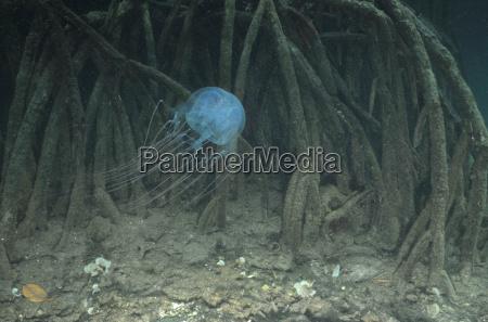 in den mangroven