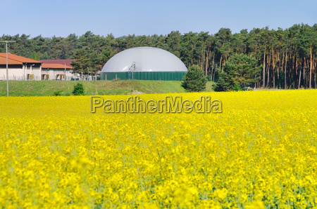 biogasanlage rapsfeld biogas plant rape