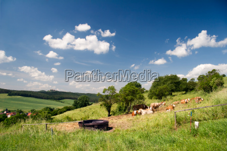 summer landscape unterbodnitz the leuchtenburg on