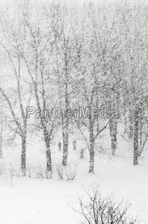 heavy snowfalling