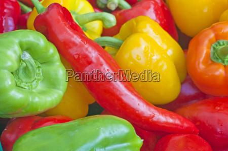 paprika rot gelb und gruen