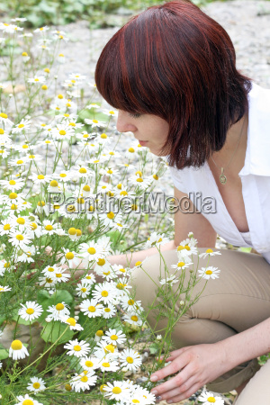health and well being with camomile