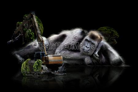 gorilla naturschutz