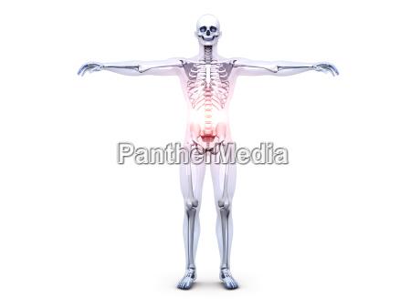 belly ache anatomy