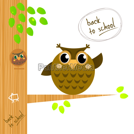 brown wise owl on tree isolated