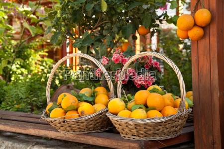 korb mit frischen orangen