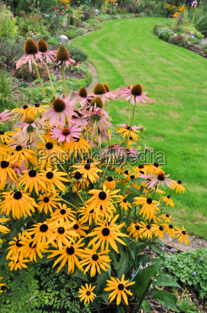 rudbeckia sun hat in the autumnal
