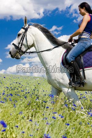 reiten, auf, dem, pferderücken - 5380441