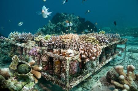 kuenstliches korallenriff