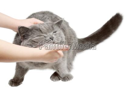 glueckliche katze freut sich mit hand