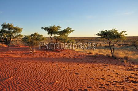 roter sand und busch bei sonnenuntergang