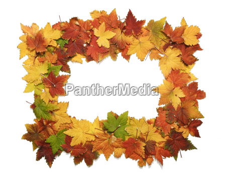 isolated frame of fall leaves