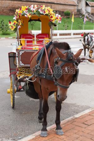 pferdekutsche in lampang thailand