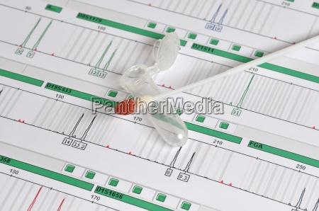 dna profil genetischer fingerabdruck
