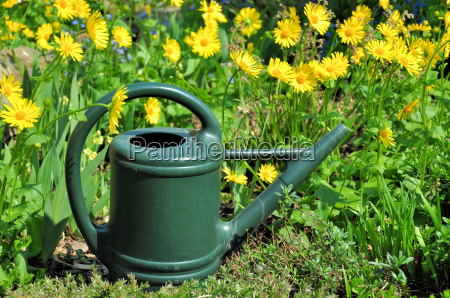 watering can with vegetable root