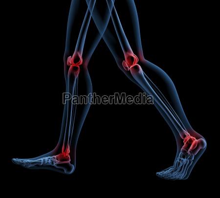 skelett beine zu fuss