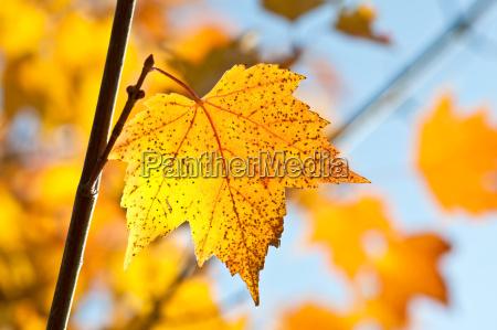cores do outono bordo outubro temporada