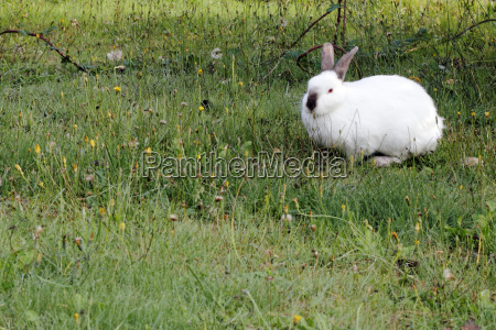 tier wild kaninchen hase feldhase muemmler