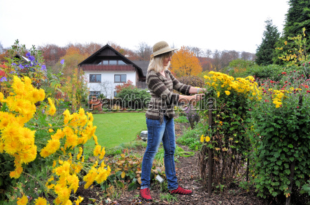 flower care in the autumn garden