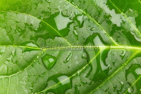 gruenes blatt macro