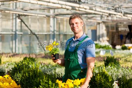 Gärtner im Gewächshaus der Gärtnerei - Stockfoto - #5736447 ...