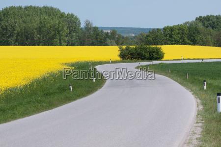 strada di paese con campo di