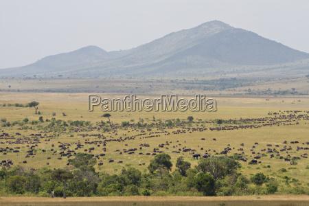 elefant safari wildgehege bueffel bueffelochse wiese
