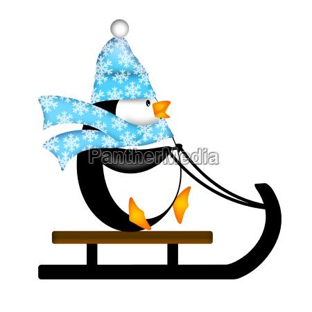 netter pinguin auf schlitten illustration